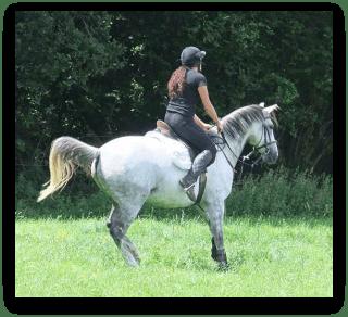 horsespooksatjumpediteddropshadow